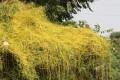 জটিল রোগ সারাবে যে ২১টি ঔষধি বৃক্ষ